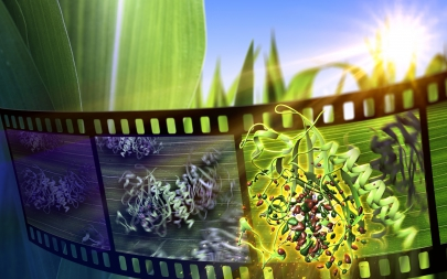 XFEL Pulses Demonstrate How Plants Perceive Light